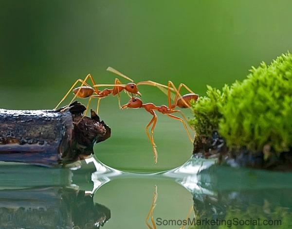 La cooperación entre pymes es la clave para crecer en tiempos difíciles